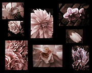 Photo Collage Photo Prints - Cameo Pink flower photo collage Print by Ann Powell