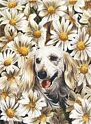Daisies Drawings Prints - Camoflaged Print by Barbara Keith