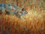 Coyote Paintings - Camouflage by Jim Clements