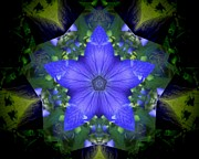 Mandala Photos - Campanula Star Flower Mandala by Rene Crystal