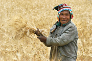 Indigenous Prints - campesino cutting wheat. Republic of Bolivia. Print by Eric Bauer