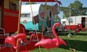 Flamingos Photos - Camping flamingos by Robert Crespin