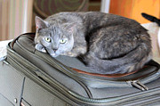 Animal Digital Art Digital Art Prints - Can I Come With You Print by Suzanne Gaff