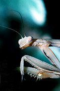 Alien Bug Photos - Can I help you by Jerry McElroy