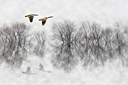 Flooded Prints - Canada Geese in Fog Print by Patrick Ziegler