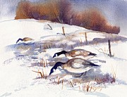 Game Painting Prints - Canada Geese in Stubble Field II Print by Peggy Wilson
