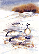 Game Painting Prints - Canada Geese in Stubble Field Print by Peggy Wilson