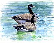 Water Fowl Posters - Canada Geese Poster by John D Benson
