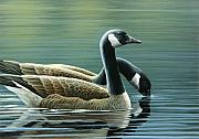 Waterfowl Painting Posters - Canada Geese Poster by Mark Mittlesteadt