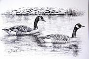 Canada Geese Print by Terence John Cleary