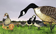 Goose Drawings - Canada Goose - Greylag Goose with fledglings chicks - White fronted Goose -  Barnacle Goose by Urft Valley Art