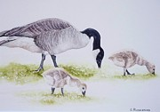 Canadian Geese Painting Posters - Canadian Aliens Poster by Claudia Rutherford