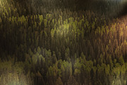 Horizontal Art - Canadian Forest - The woods are lovely dark and deep by Christine Till
