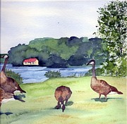 Geeses Prints - Canadian geese s Print by Gloria Couture
