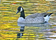 Jeanne Thomas - Canadian Goose-The...