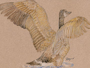 Canadian Geese Pastels - Canadian Goose Two by Flo Hayes