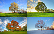 Quebec Photos - Canadian seasons by Mircea Costina Photography