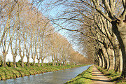 Canal With Tree Print by Teocaramel