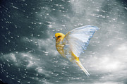 Canary Metal Prints - Canary Flying In Storm Metal Print by PM Images