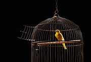 Canary Metal Prints - Canary In Cage With Open Door Metal Print by PM Images