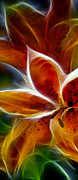 Candy Digital Art - Candy Lily Fractal Panel 1 by Peter Piatt