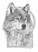 Wolf Drawings Framed Prints - Canis lupus IV - Wolf Pack  Alpha Leader Framed Print by Steven Paul Carlson
