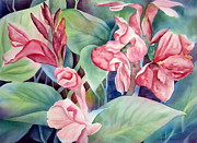 Canna Painting Framed Prints - Canna Framed Print by Deborah Ronglien