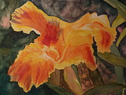 Canna Paintings - Canna in morning light by Carol Marcus