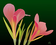 Canna Posters - Canna Lilly Whimsy Poster by Rand Herron