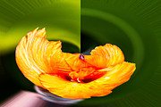 Canna Digital Art - Canna Lily 1 Rounder by Russel Ray