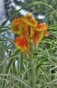 Canna Metal Prints - Canna Lily Metal Print by David Bearden