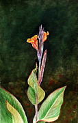 Canna Painting Framed Prints - Canna Lily Framed Print by Irina Sztukowski