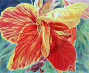 Red Canna Originals - Canna Lily by Tina Storey