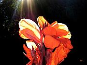 Canna Photo Metal Prints - Canna Lily Metal Print by Will Borden