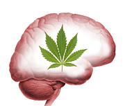 Human Brain Art - Cannabis Use, Artwork by Victor De Schwanberg