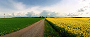 Europe Photo Originals - Canola-Rapeseed flowers by Jan Faul