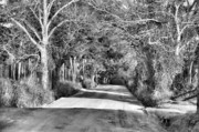 Country Scenes Prints - Canopy Clay Road Print by Jan Amiss Photography