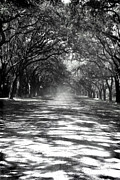Gravel Road Framed Prints - Canopy Framed Print by Jessica Smith