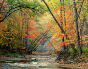 Beautiful Creek Posters - Canopy of Color II Poster by Robert Harmon