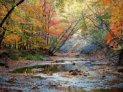 Beautiful Creek Posters - Canopy of Color IV Poster by Robert Harmon