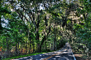 Tallahassee Prints - Canopy Road Print by Alex Owen
