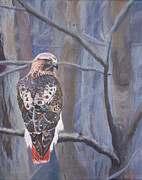 Red-tailed Hawk Paintings - Cant See the Forest for the Trees by Bill Werle