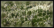 Desert Prints - Canvas of Cacti Print by Carol Groenen
