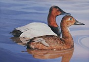 Ducks Paintings - Canvasbacks by Don Evans