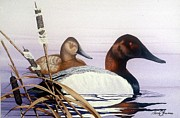 Waterfowl Paintings - Canvasbacks in the reeds by Barry Louwerse