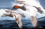 Waterfowl Paintings - Canvasbacks over the waves by Barry Louwerse
