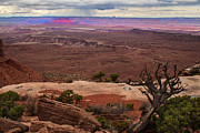 Canyonland Framed Prints - Canyonland Overlook Framed Print by Robert Bales