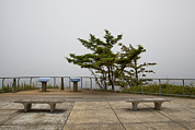 Viewpoint Photos - Cape Arago State Park On The Central by Douglas Orton