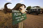Tarangire Prints - Cape Buffalo Horns Atop An Entry Sign Print by Roy Toft