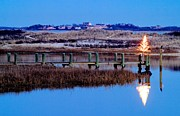 Matt Suess Prints - Cape cod Christmas tree Print by Matt Suess